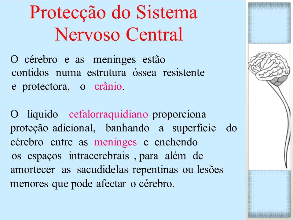Protecção do Sistema Nervoso Central O cérebro e as meninges estão