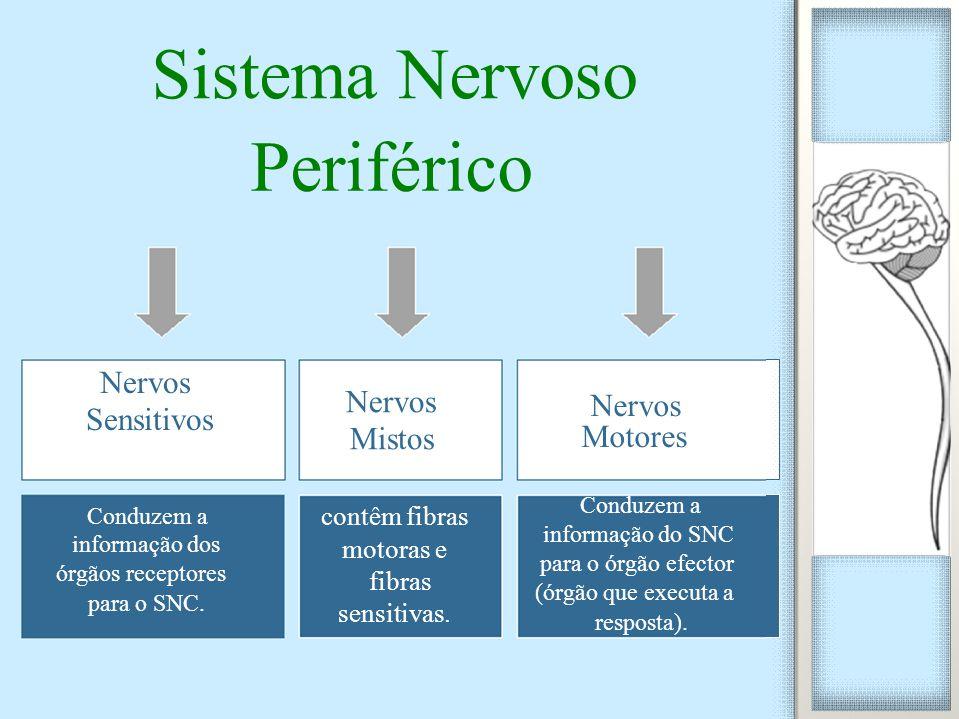 Sistema Nervoso Periférico Sensitivos Nervos Mistos Motores Conduzem a