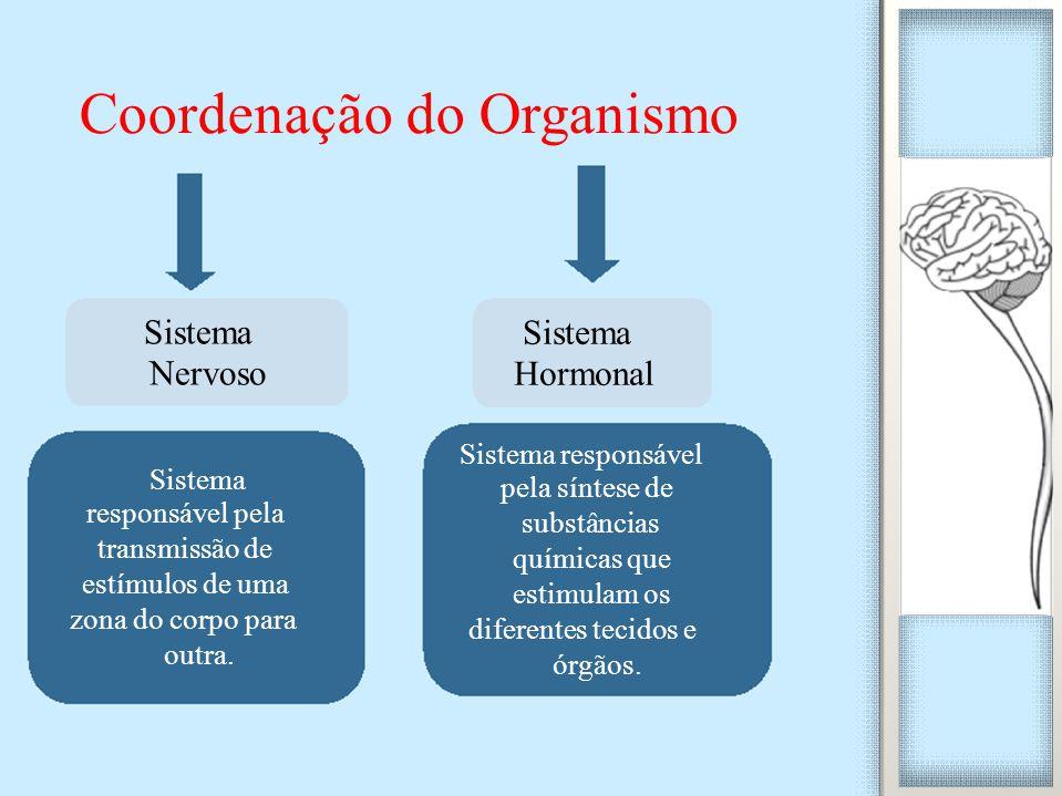 Coordenação do Organismo