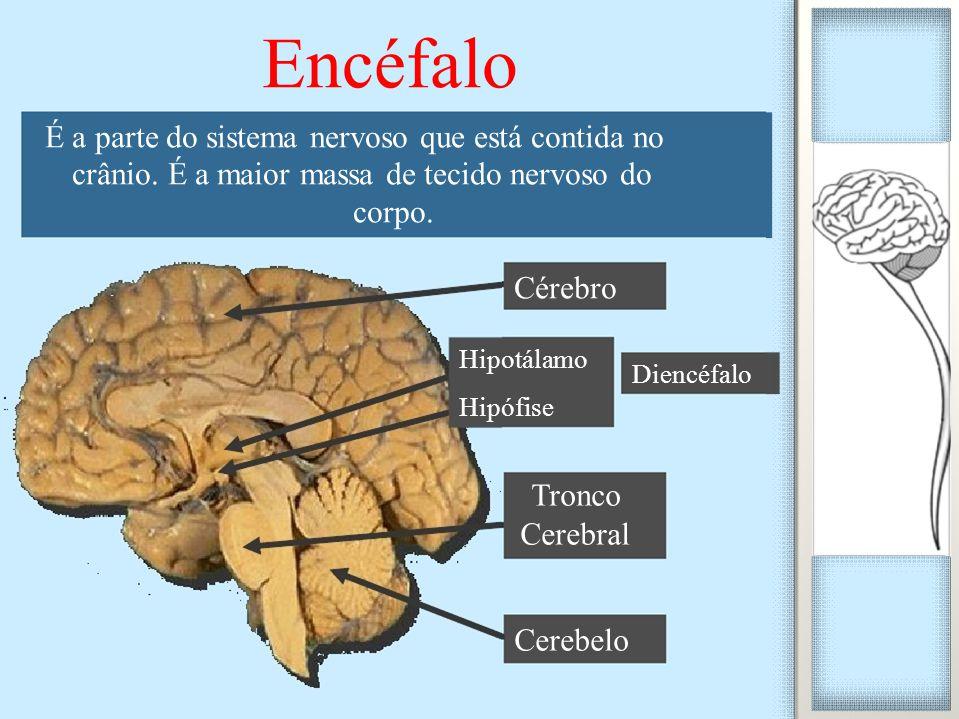 É a parte do sistema nervoso que está contida no