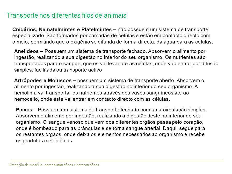 Transporte nos diferentes filos de animais