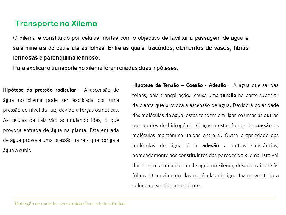 Transporte no Xilema