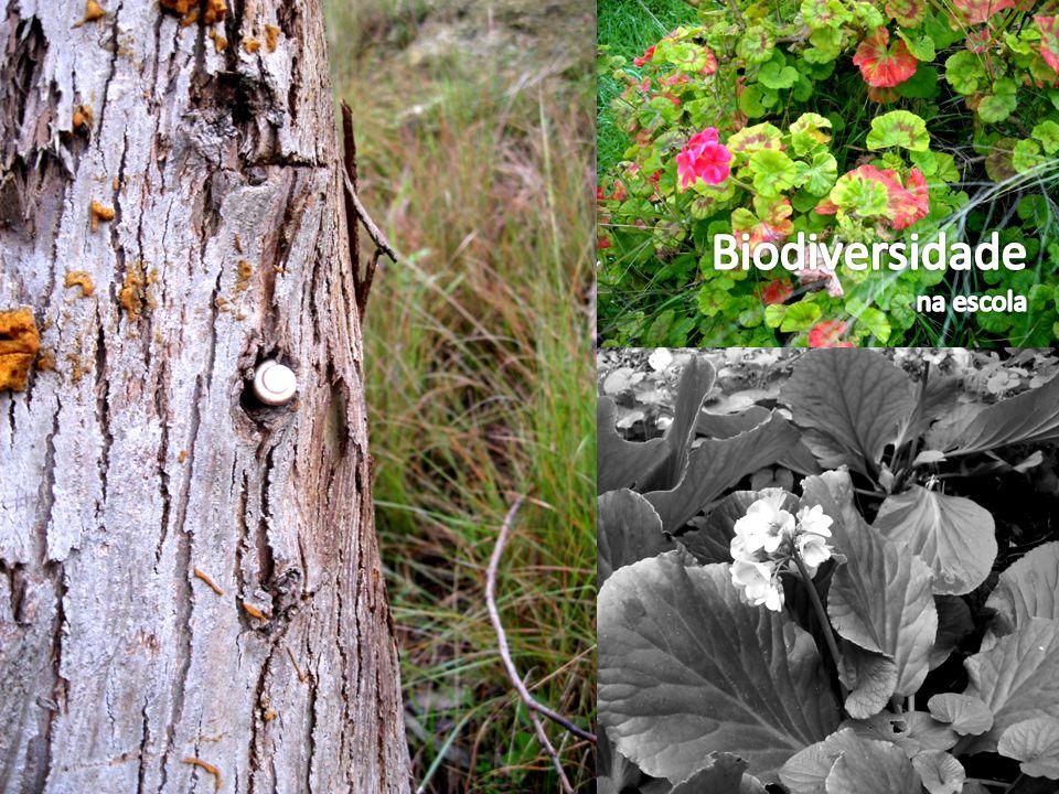 Biodiversidade na escola