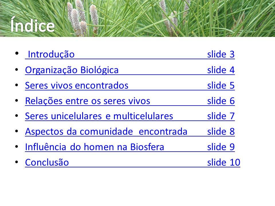 Índice Introdução slide 3 Organização Biológica slide 4