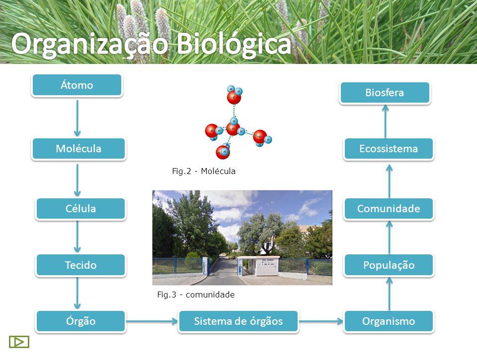 Organização Biológica