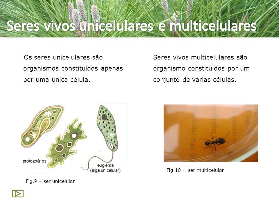 Seres vivos unicelulares e multicelulares