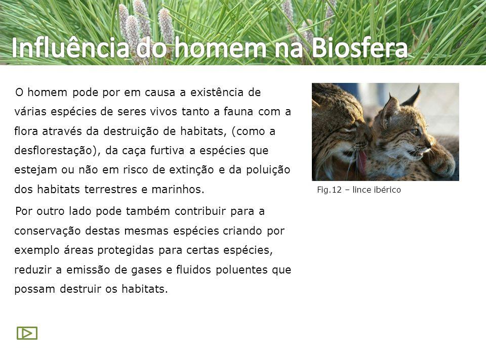 Influência do homem na Biosfera