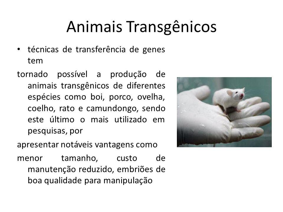 Animais Transgênicos técnicas de transferência de genes tem