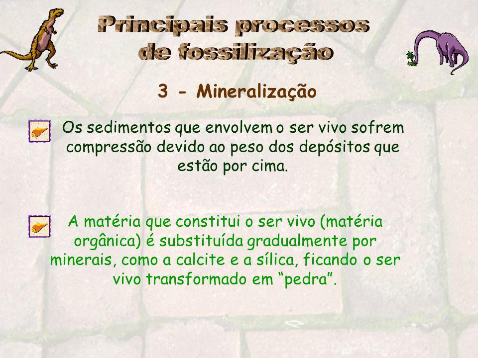 Principais processos de fossilização 3 - Mineralização
