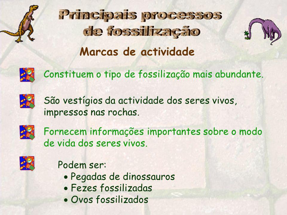 Principais processos de fossilização Marcas de actividade