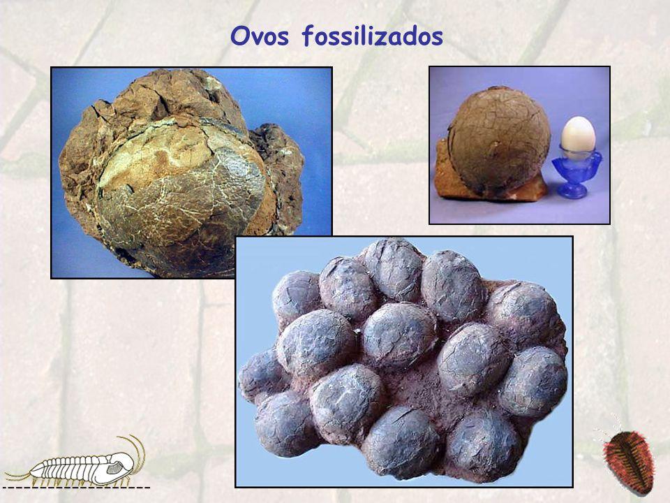 Ovos fossilizados