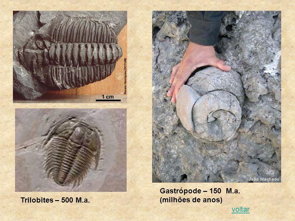 Gastrópode – 150 M.a. (milhões de anos)