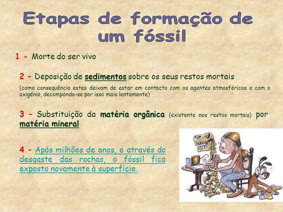 Etapas de formação de um fóssil