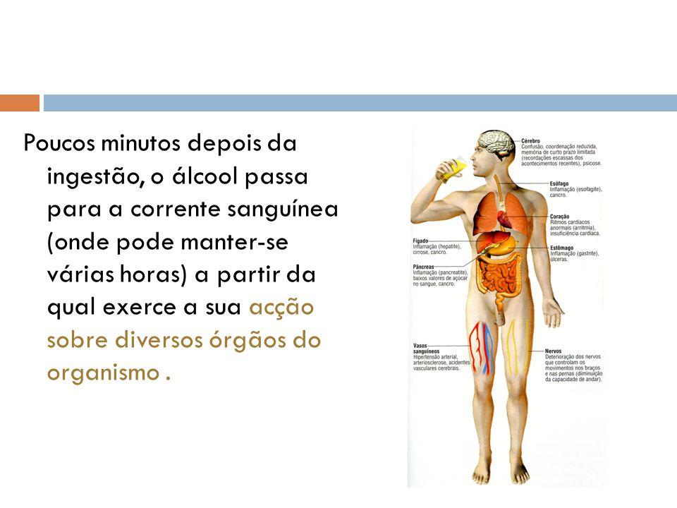 Poucos minutos depois da ingestão, o álcool passa para a corrente sanguínea (onde pode manter-se várias horas) a partir da qual exerce a sua acção sobre diversos órgãos do organismo .