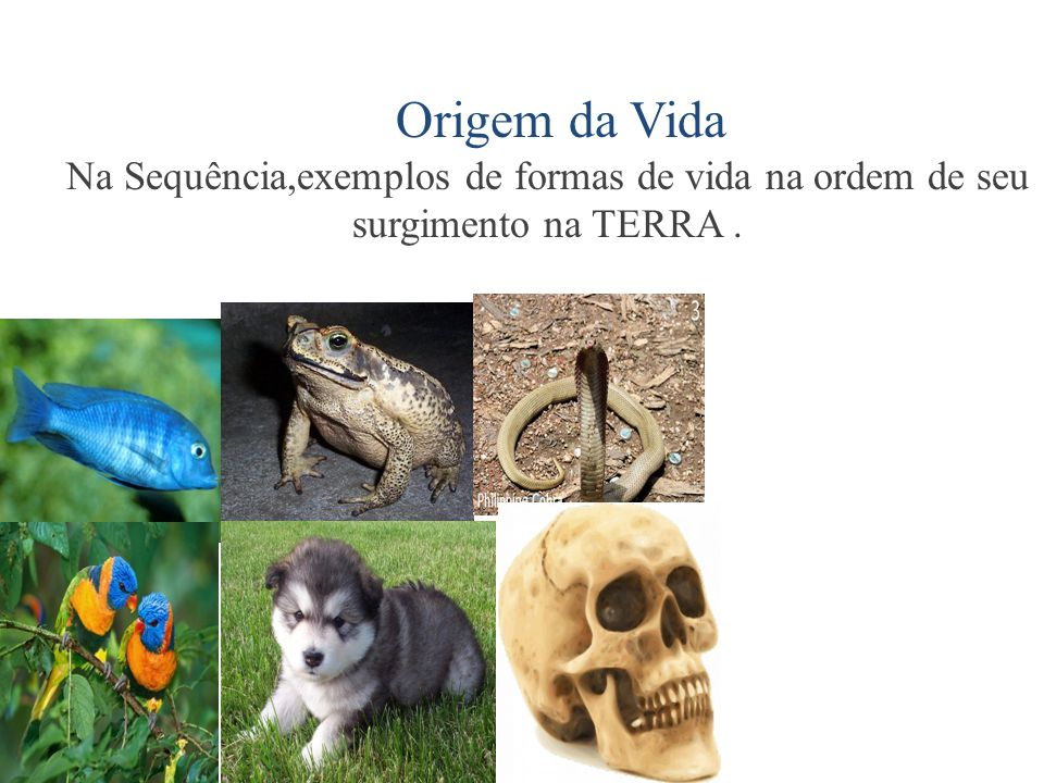 Origem da Vida Na Sequência,exemplos de formas de vida na ordem de seu surgimento na TERRA .