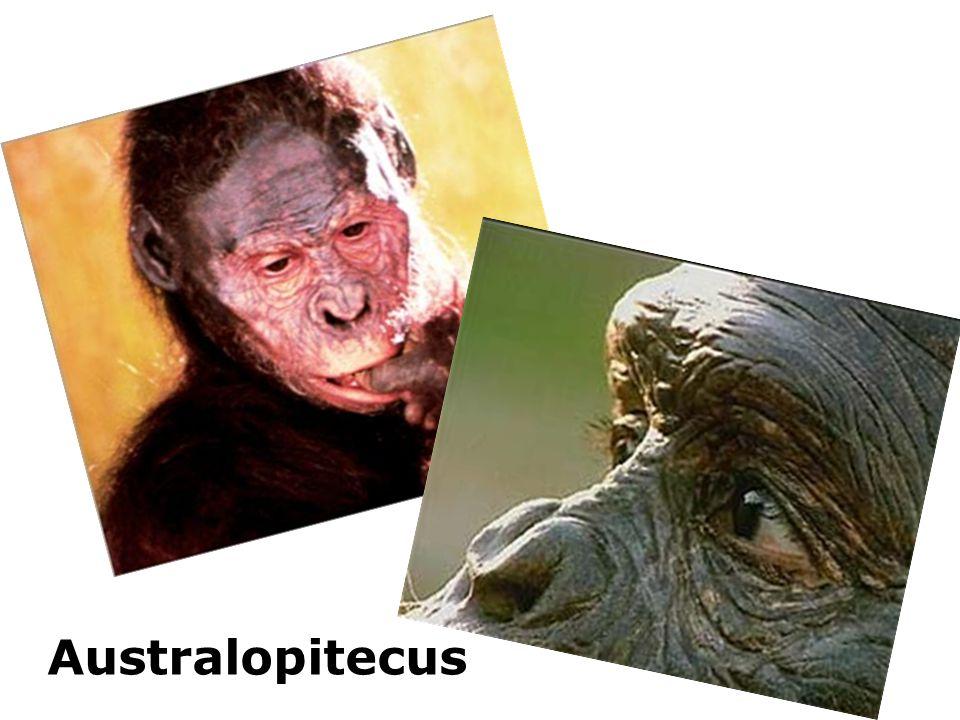 Australopitecus