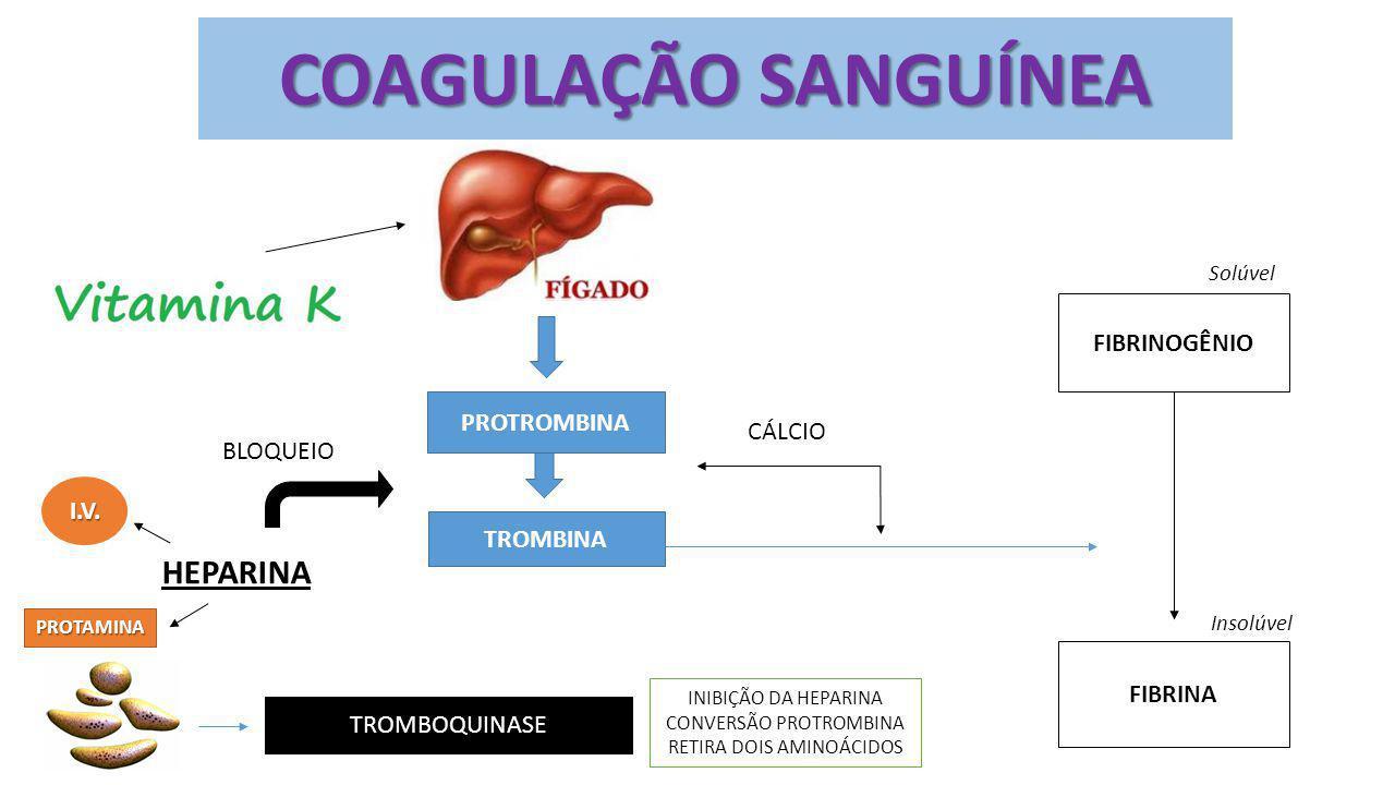 COAGULAÇÃO SANGUÍNEA HEPARINA FIBRINOGÊNIO PROTROMBINA CÁLCIO BLOQUEIO