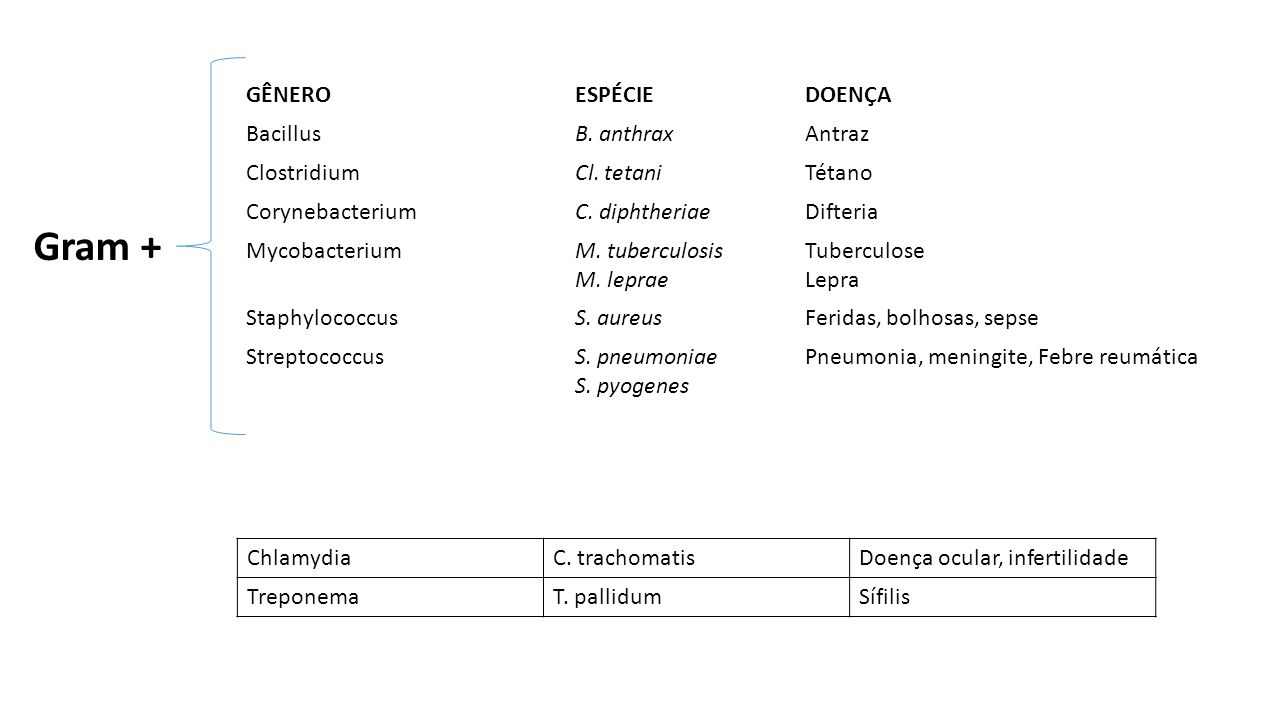 Gram + GÊNERO ESPÉCIE DOENÇA Bacillus B. anthrax Antraz Clostridium