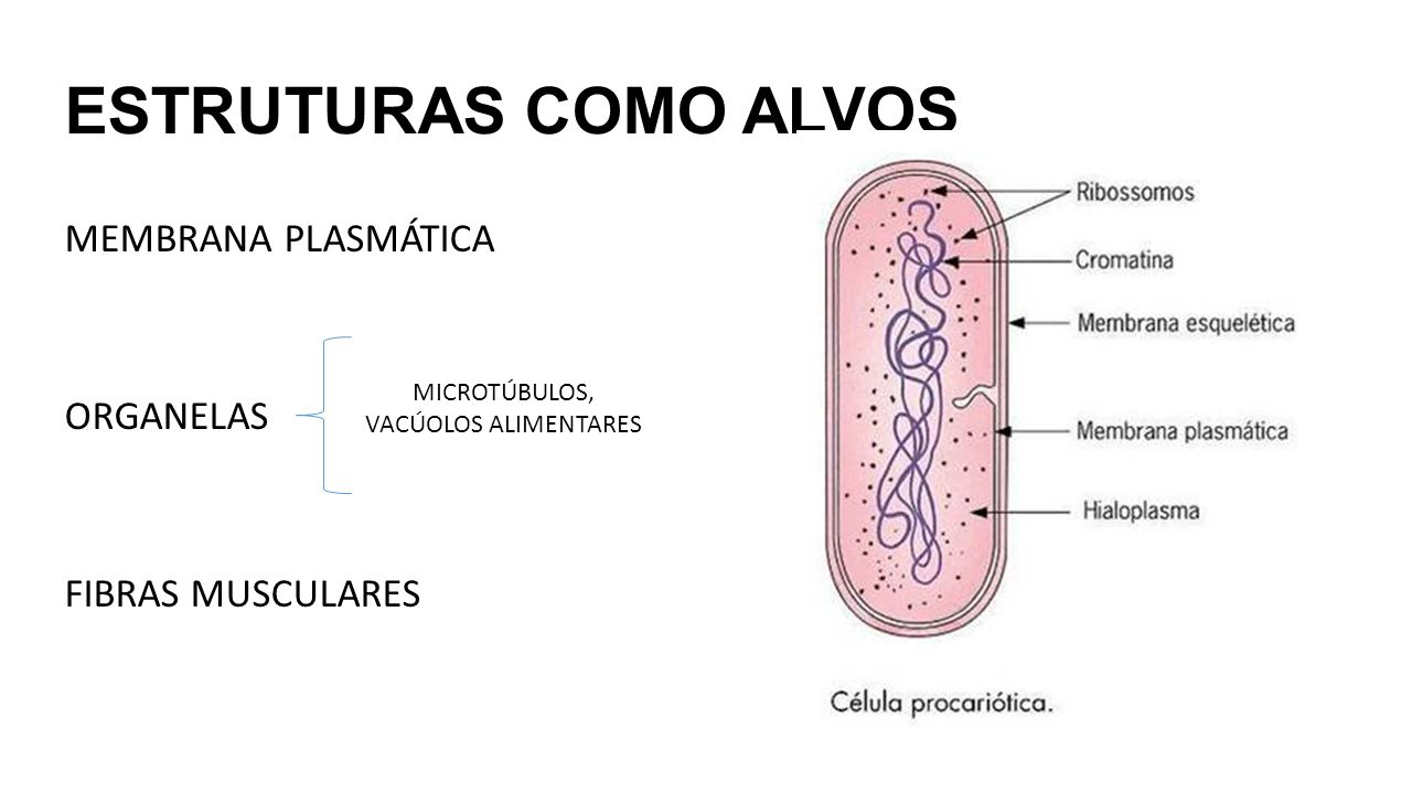 MICROTÚBULOS, VACÚOLOS ALIMENTARES