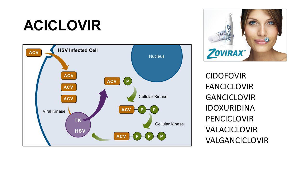 ACICLOVIR CIDOFOVIR FANCICLOVIR GANCICLOVIR IDOXURIDINA PENCICLOVIR