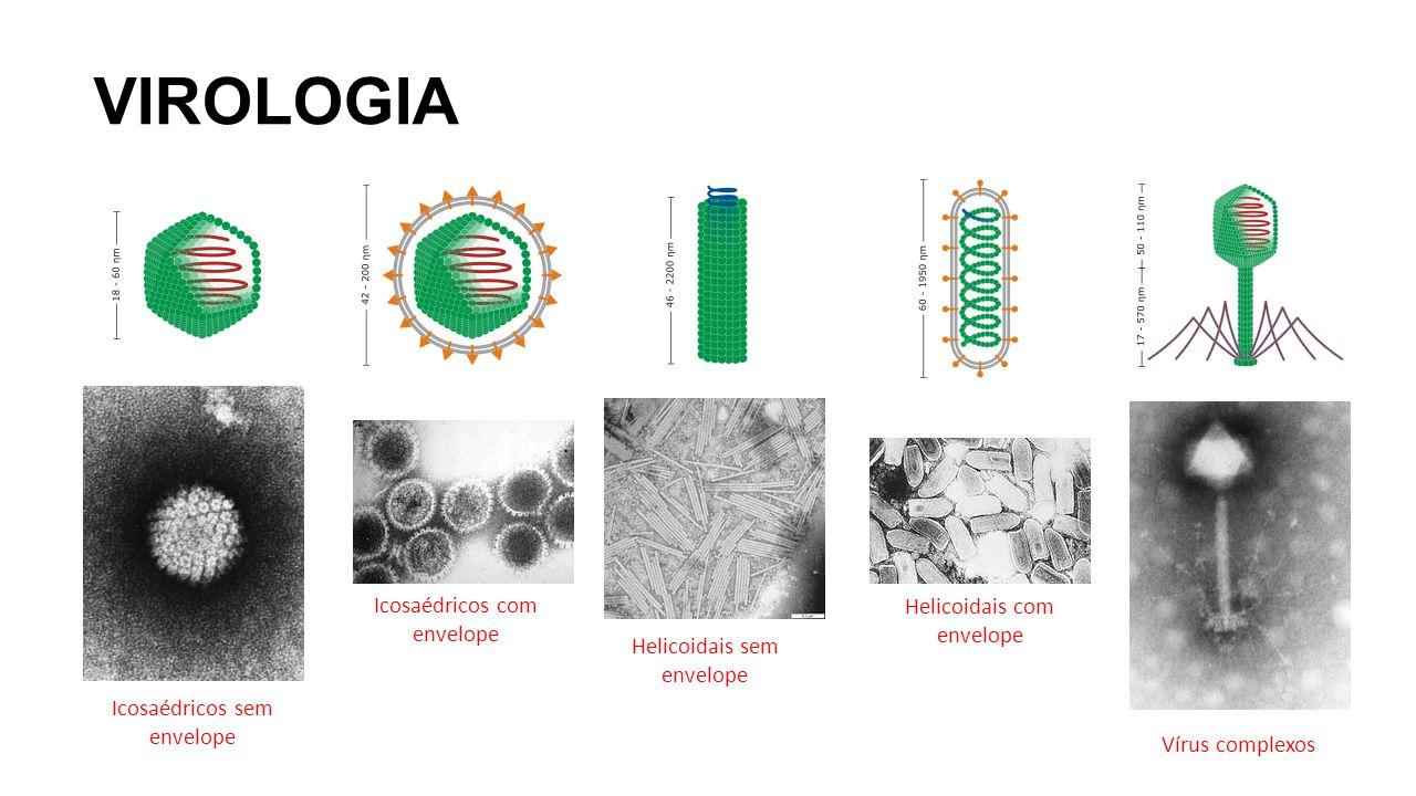 VIROLOGIA Icosaédricos com envelope Helicoidais com envelope