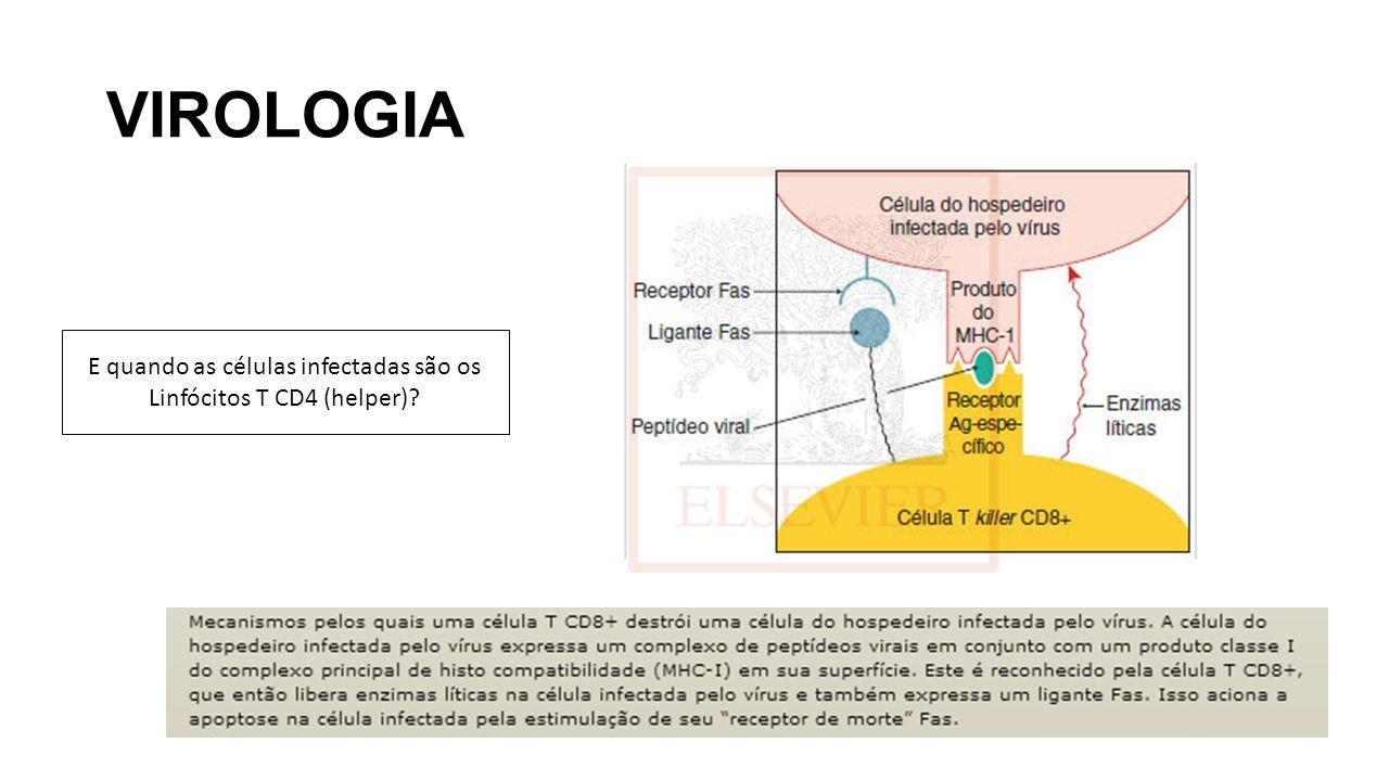 E quando as células infectadas são os Linfócitos T CD4 (helper)
