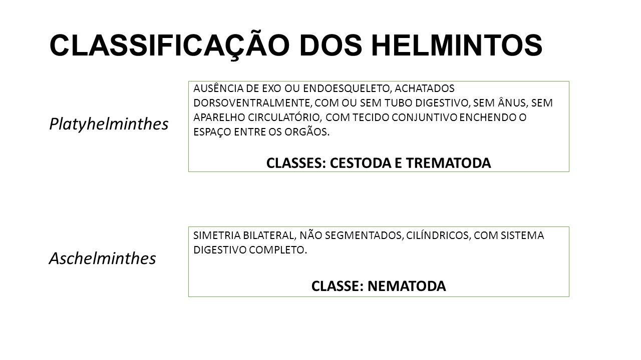 CLASSIFICAÇÃO DOS HELMINTOS