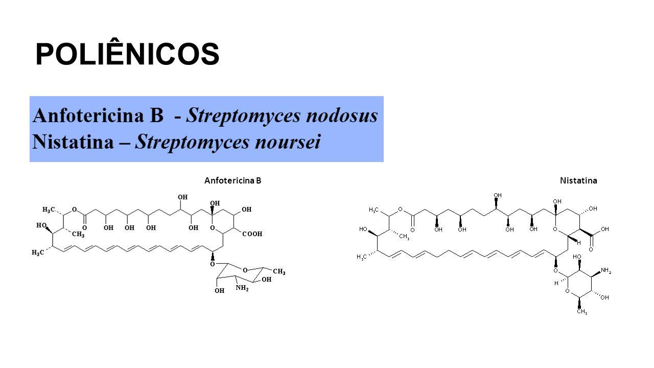POLIÊNICOS Anfotericina B Nistatina
