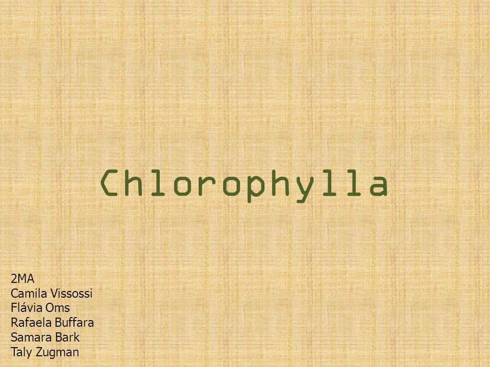 Chlorophylla 2MA Camila Vissossi Flávia Oms Rafaela Buffara