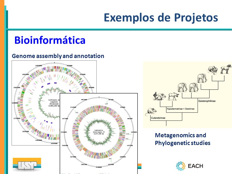 Exemplos de Projetos Bioinformática Genome assembly and annotation
