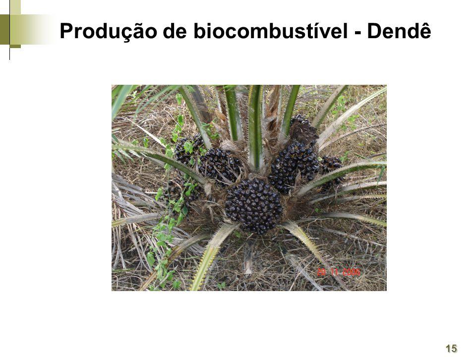 Produção de biocombustível - Dendê