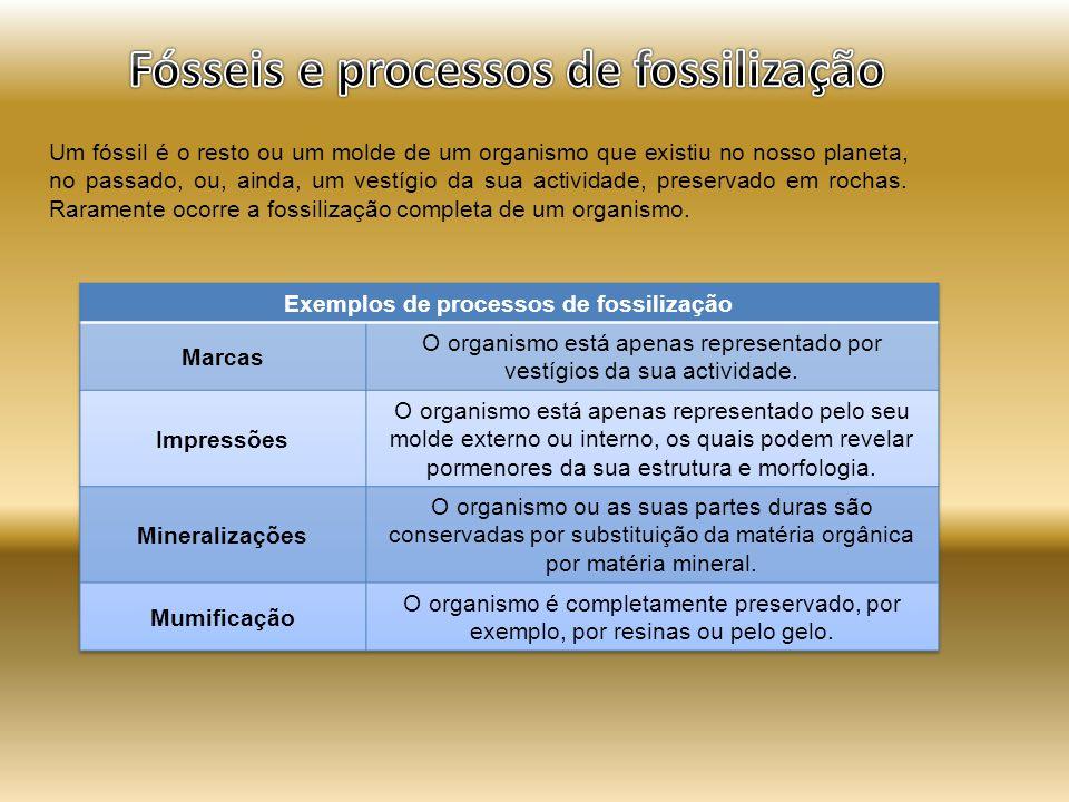 Fósseis e processos de fossilização