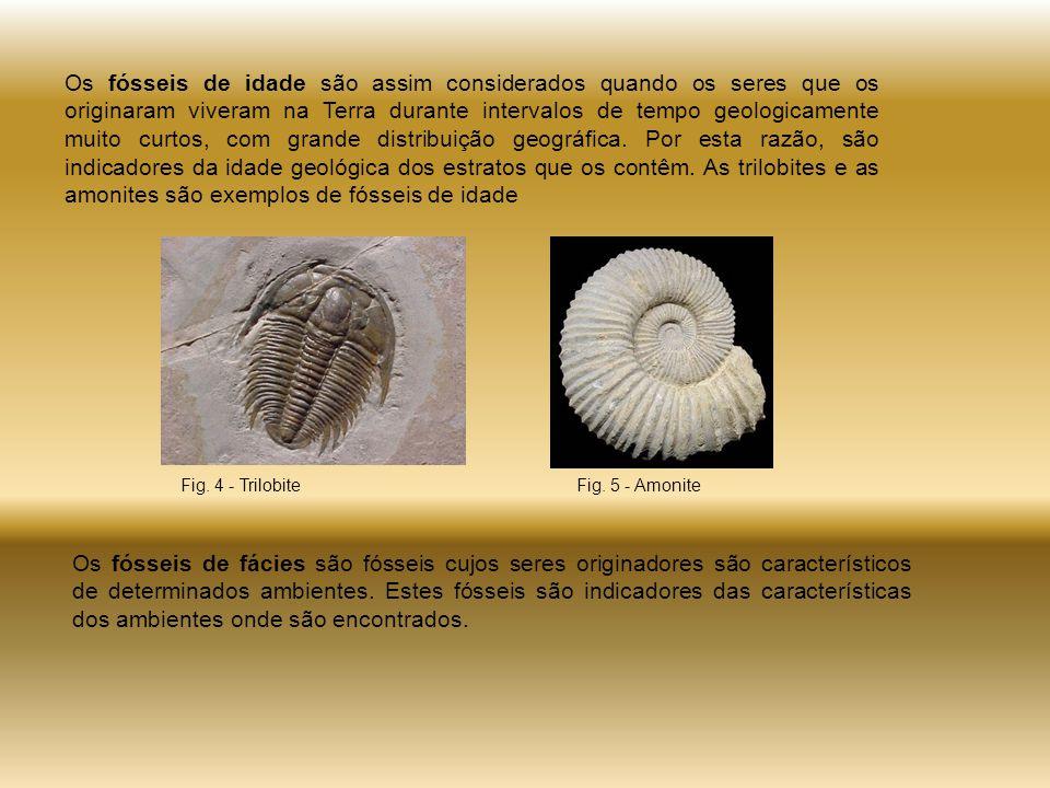 Os fósseis de idade são assim considerados quando os seres que os originaram viveram na Terra durante intervalos de tempo geologicamente muito curtos, com grande distribuição geográfica. Por esta razão, são indicadores da idade geológica dos estratos que os contêm. As trilobites e as amonites são exemplos de fósseis de idade