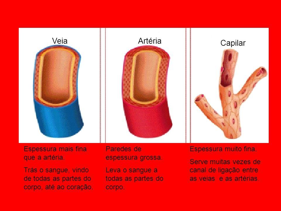 Veia Artéria Capilar Espessura mais fina que a artéria.