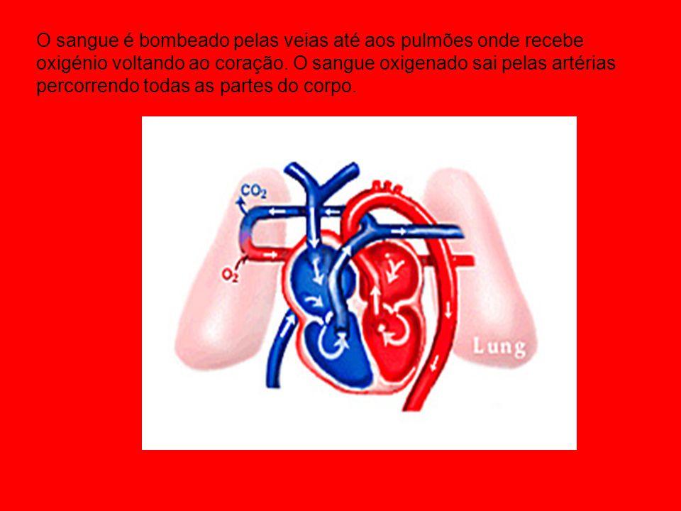 O sangue é bombeado pelas veias até aos pulmões onde recebe oxigénio voltando ao coração.