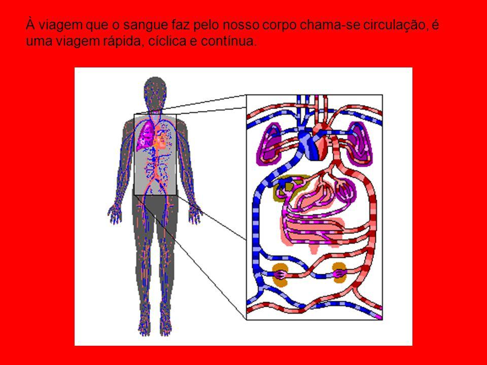 À viagem que o sangue faz pelo nosso corpo chama-se circulação, é uma viagem rápida, cíclica e contínua.