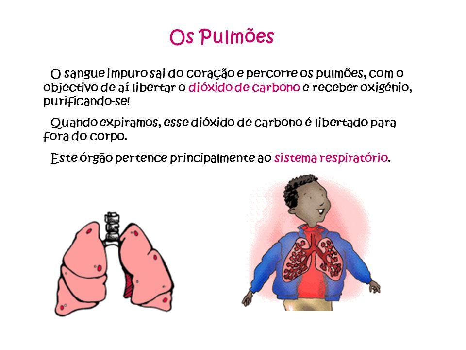 Os Pulmões