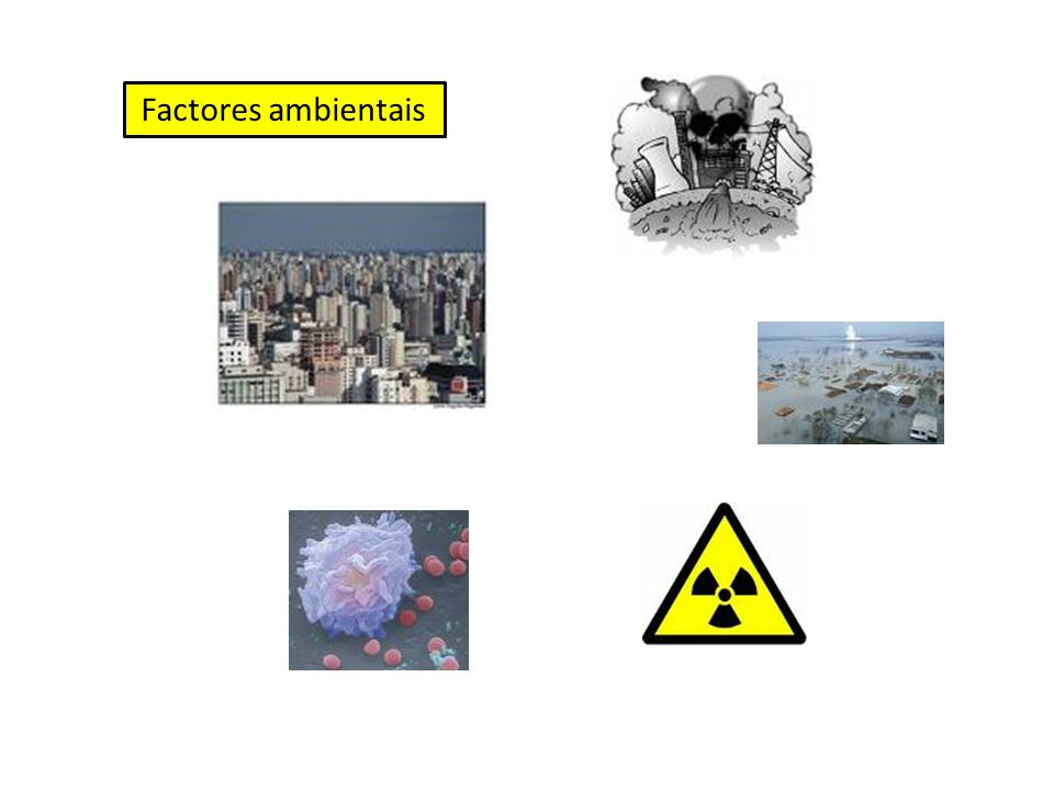 Factores ambientais