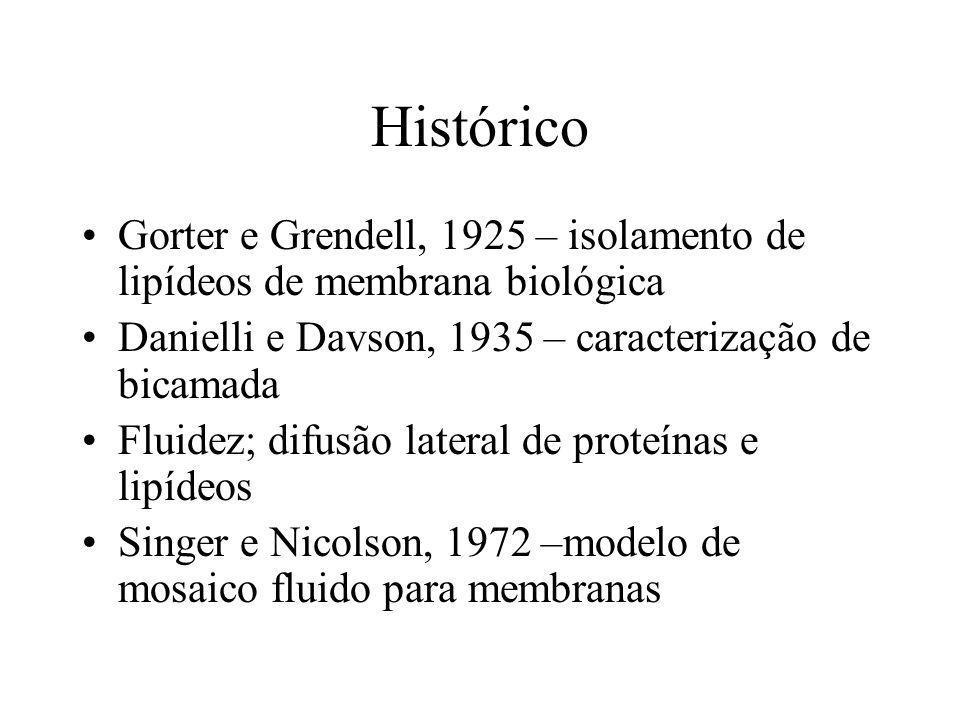 Histórico Gorter e Grendell, 1925 – isolamento de lipídeos de membrana biológica. Danielli e Davson, 1935 – caracterização de bicamada.