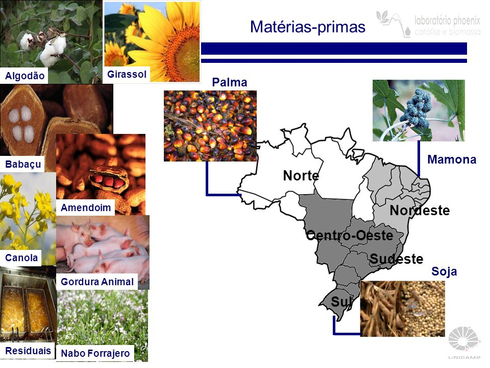 Matérias-primas Norte Nordeste Centro-Oeste Sudeste Sul Palma Mamona