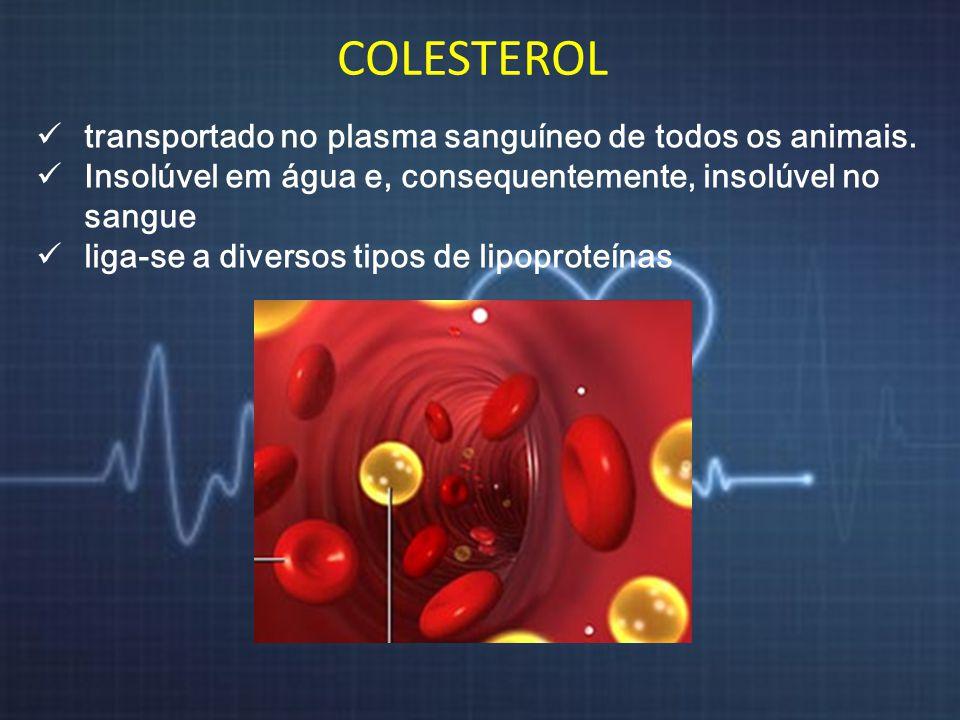 COLESTEROL transportado no plasma sanguíneo de todos os animais.