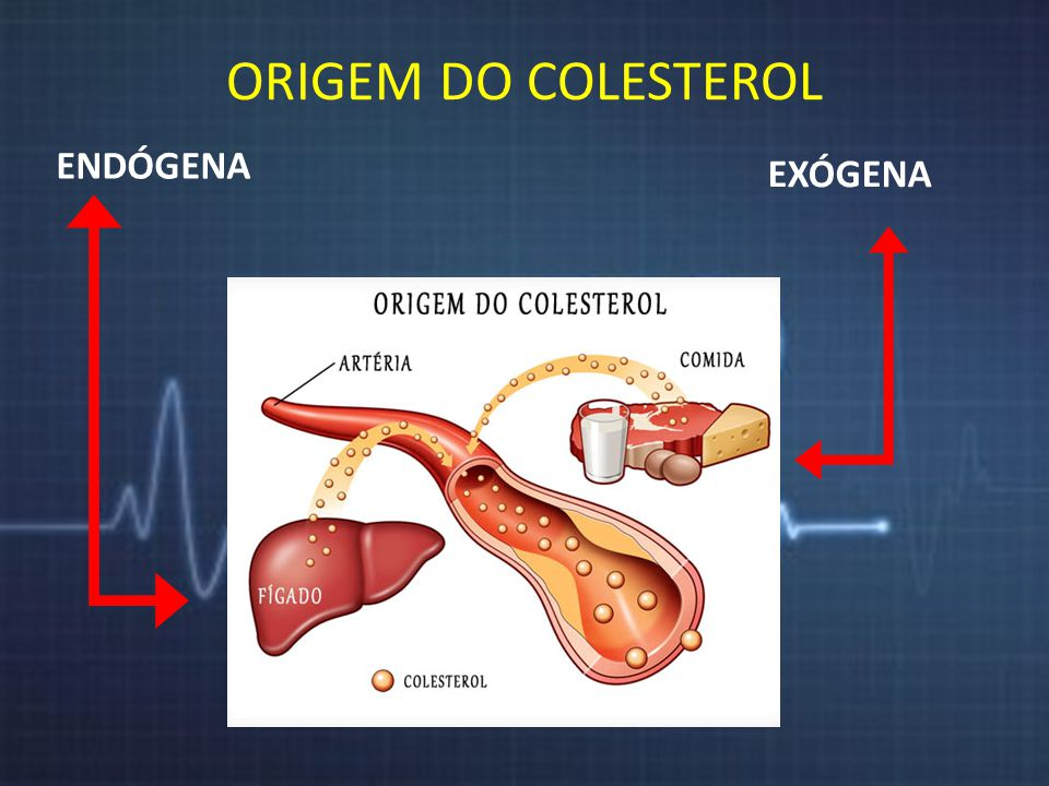 Colesterol ORIGEM DO COLESTEROL ENDÓGENA EXÓGENA