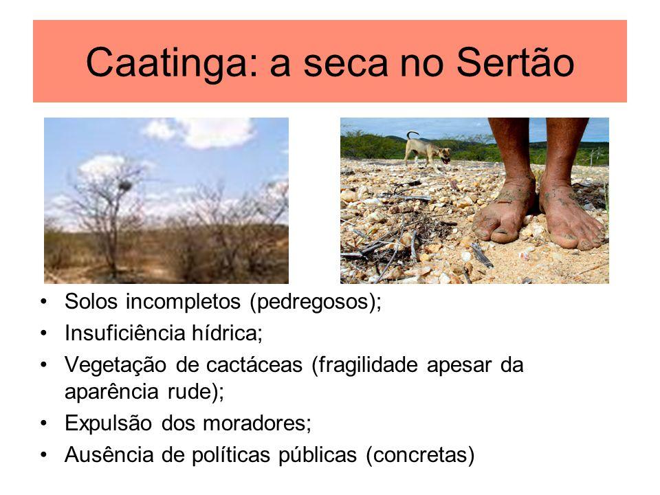 Caatinga: a seca no Sertão