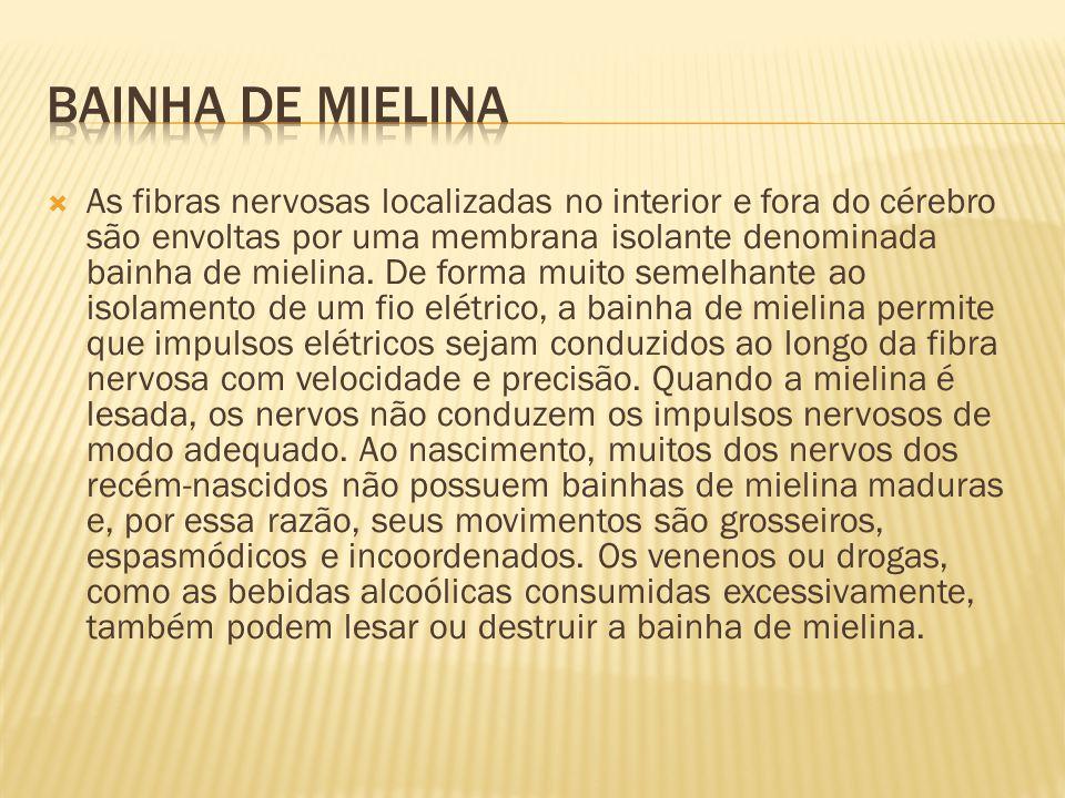 Bainha de mielina