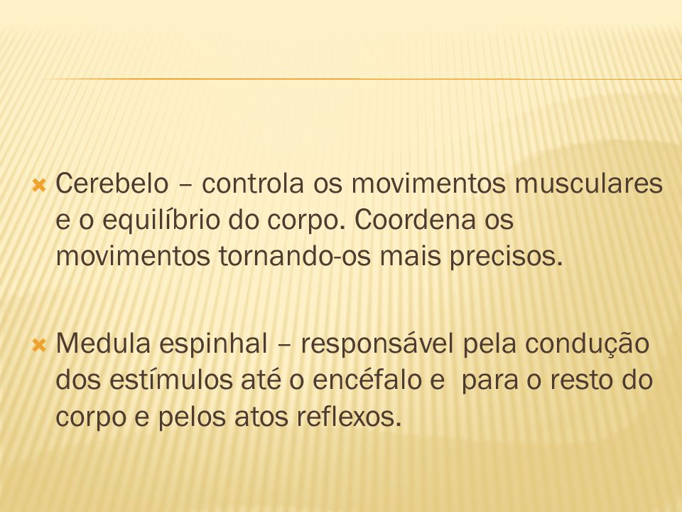 Cerebelo – controla os movimentos musculares e o equilíbrio do corpo