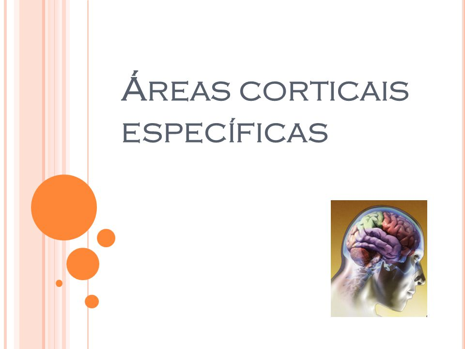 Áreas corticais específicas