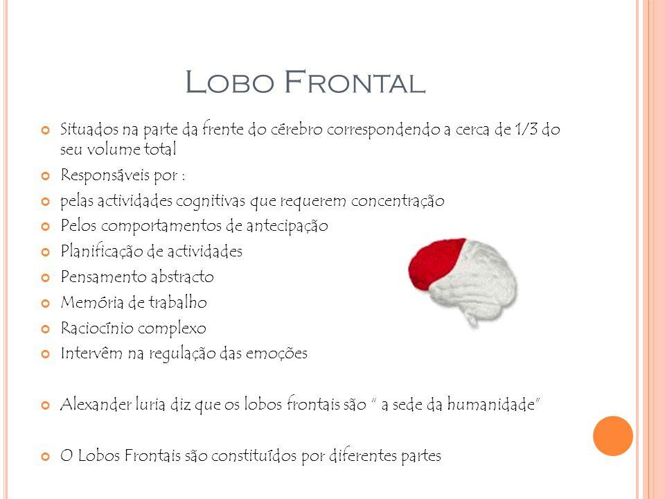 Lobo Frontal Situados na parte da frente do cérebro correspondendo a cerca de 1/3 do seu volume total.