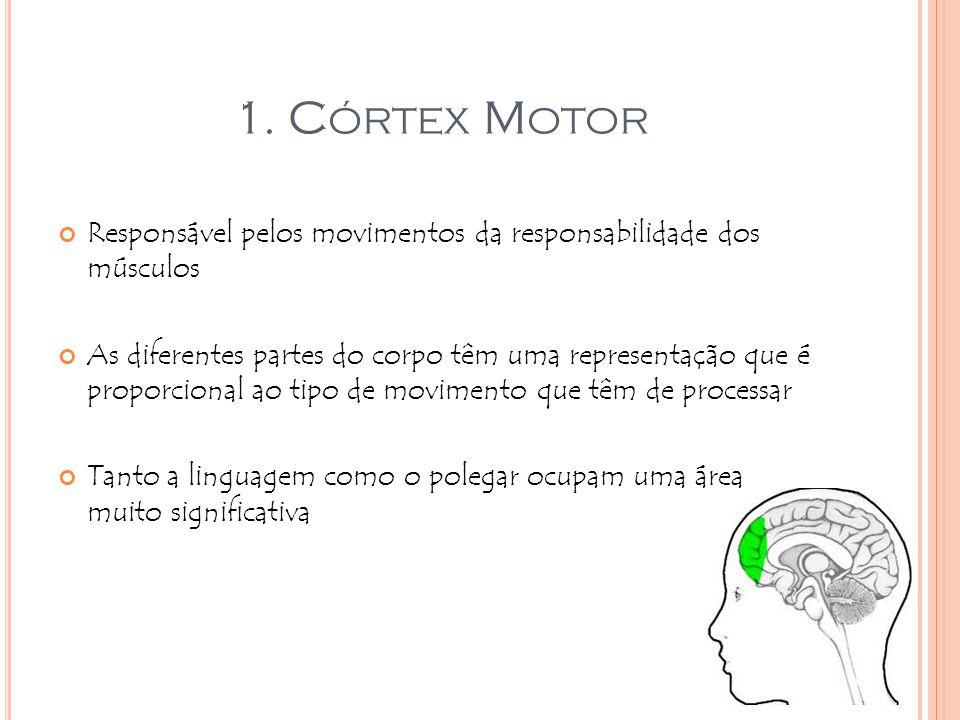 1. Córtex Motor Responsável pelos movimentos da responsabilidade dos músculos.
