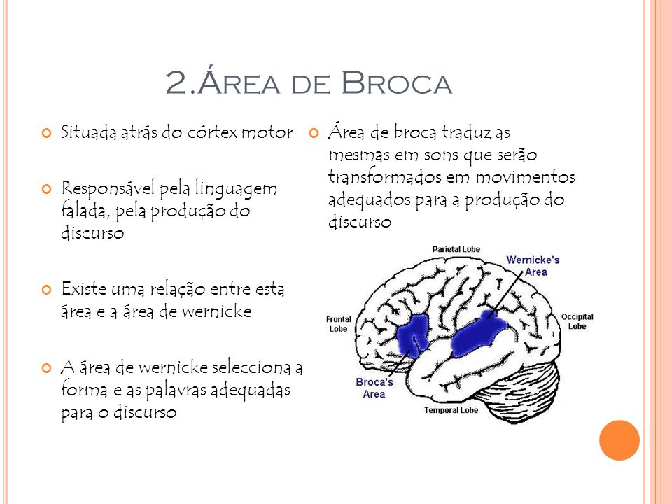 2.Área de Broca Situada atrás do córtex motor