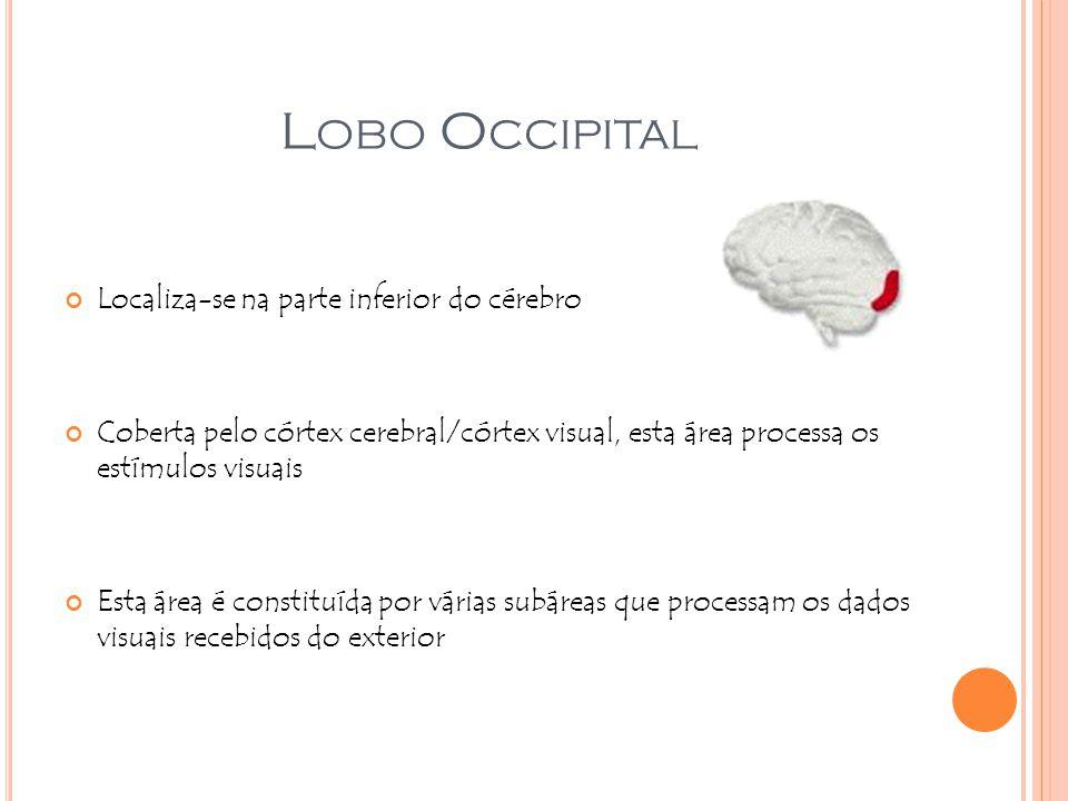 Lobo Occipital Localiza-se na parte inferior do cérebro
